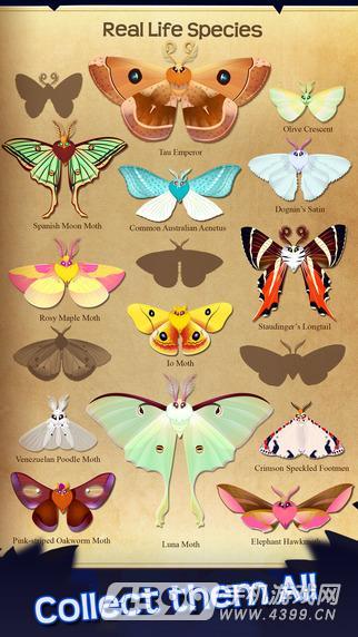 蝴蝶之星夜游戏截图