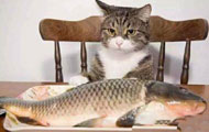心有鱼而力不足!!