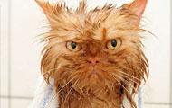 尼玛的,我都说我不洗澡了!