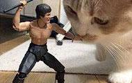 你们知道猫为啥那么淡定吗?