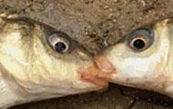 红烧鱼和水煮鱼的故事