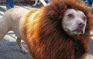 刚买的一头狮子,求鉴定!